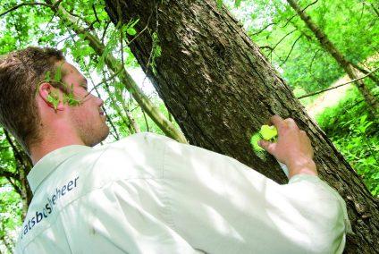bos en natuurbeheer - medewerker staatsbosbeheer 1