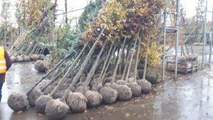 Mooie bomen uitgezocht